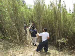 女竹の状態観察