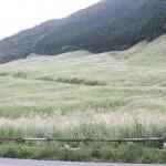 仙石原のススキ・・・まだ半分と言うところ・・・